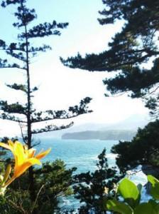 <城ヶ崎海岸の初夏> @伊豆高原駅やんも口より徒歩約30分  「かさご根」~「こさいつな付近」    オレンジ色の花はハマカンゾウ