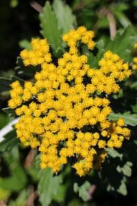 小さい花がかわいらしい